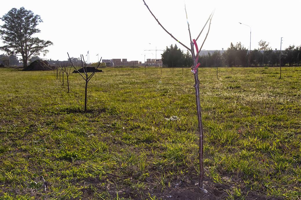 En la imagen se observa a algunas de las plantas colocadas en un predio del Parque Industrial.